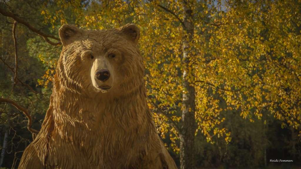 Den største bjørnen i Bjørneløypa-2910